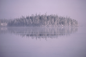 Trees on an island on a frosty morning with mist. Boreal Forest. Lake Bourinot Quebec. Canadian subarctic. 1988
