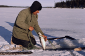 Cree trapper checks his net set under the ice of a  frozen lake. Quebec, Canada. 1988
