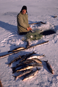 Billy Edwards, a Cree hunter with catch of Whitefish & Suckers caught in a net under the ice. Northern Quebec, Canada. 1988
