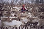 Sami herder, Aslak, with his reindeer herd. Kautokeino, Sapmi. North Norway. 1985