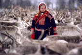 Sami woman herder, Marit, among her reindeer before the spring migration. Kautokeino. North Norway. 1985