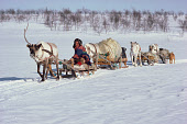 Sami herder, Johan Henrik sits on his reindeer sled during spring migration. Kautokeino, N. Norway. 1985