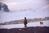 Sami herder's dog howls on command to keep migrating reindeer in a close group. Kautokeino, N.Norway. 1985