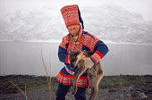 Sami reindeer herder, Aslak, with a calf born at the end of the migration. North Norway. 1985