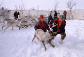 Mattis and Marit-Anne Sara, Sami herders, move a reindeer in the corral pre migration. Karasjok. Sapmi. Norway. 2000
