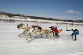 Young Saami ski behind reindeer during a race at Kautokeino. Finnmark, North Norway. 2007