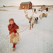 Young Saami girl, Inga-Anna, leads sled Reindeer at the start of the Spring migration. Kautokeino. Norway. 1972