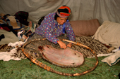 At an Innu hunting camp, Enen, laces a beaver skin onto a frame to dry. Southern Labrador, Canada. 1997