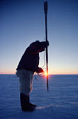Polar Inuit waits with his harpoon at a seal breathing hole in the sea ice, sunset. Northwest Greenland. 1980