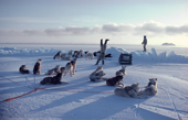 Exuberant Inuk does a handstand on sea ice, after a successful hunt. Northwest Greenland. 1980