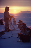 Inuit hunter, Mamarut, in the soft evening light, untangles the traces of his dog team. NW Greenland. 1980