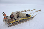 Fur dressed Inuit hunter, Mamarut, rests on his sled, whilst on a hunting trip. N.W.Greenland. 1980