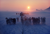 Inuit hunters and dog sleds, returning home at sunset, after hunting trip. Cape York, N.W. Greenland. 1980