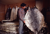 Inuit storekeeper Ajako Henson, with traded fox and seal skins.NW Greenland. 1980
