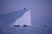Inuit hunter climbs an Iceberg to scan the sea ice for bears.  N.W.Greenland. 1986