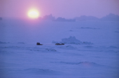 A lone dog sled makes its way over sea ice during a cold winter day in low sunlight. Qaanaaq. NW Greenland. 1977