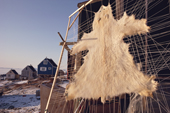 Polar bear skin stretched out to dry outside a house. Savissivik, N.W. Greenland. 1991