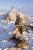 Grisha Rahtyn, a Chukchi reindeer herder, with a dead reindeer which was killed as part of a traditional ritual sacrifice. Chukotskiy Peninsula, Chukotka, Siberia, Russia