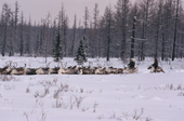 Evenk herders driving their reindeer through deep snow at their winter pastures. Evenkiya, Siberia, Russia. 1997