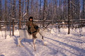 An Evenk woman riding a reindeer in the forest. Evenkiya, Siberia, Russia. 1997