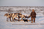 Velodia Dirkatch, a Sami man from Lovozero, with his reindeer sled. Murmansk, NW Russia. 2005
