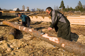 Forestry workers stripping the bark off pine logs near Gus-Zheleznyy. Ryazan Province, Russia. 2006