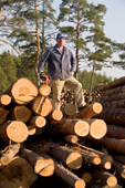 A forestry worker with a chain saw stands on a pile of pine logs near Gus-Zheleznyy. Ryazan Province, Russia. 2006