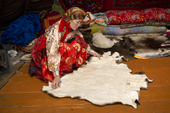 Marina Valeeva, a Komi woman, spreads a reindeer skin out on the floor of her tent which she will use to make a coat for her daughter. Yamal, Western Siberia, Russia