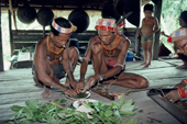 Mentawai medicine men make a potion with local medicinal plants to cure a tooth ache. Siberut Island, Indonesia.