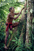 Aman Baoi, Mentawai medicine man, climbing a tree in the rainforest.  Siberut Is. Indonesia.