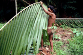 Mentawai man cuts palm branches to use as racks for drying leaves on. Siberut Island, Indonesia.