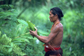 Mentawai medicine man gathers rainforest plants he will use for healing. Siberut Island, Indonesia