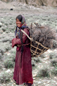 Yak herder's daughter collects firewood. Nimaling Plateau. Ladakh. India.